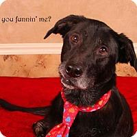 Adopt A Pet :: Ralphie - Nashville, TN