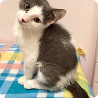 Adopt A Pet :: Vesta - Addison, IL