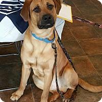 Adopt A Pet :: Gibson - Lisbon, OH