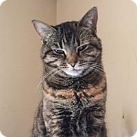Adopt A Pet :: Portia - Albany, NY