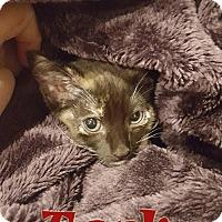 Adopt A Pet :: Toph - Chandler, AZ