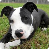 Adopt A Pet :: Titanium - Siren, WI