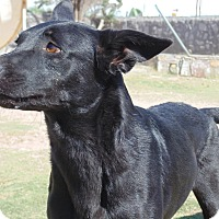 Adopt A Pet :: Rascal - Las Cruces, NM