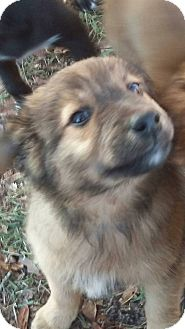 Shepherd (Unknown Type) Mix Puppy for adoption in Shaw AFB, South Carolina - Becky