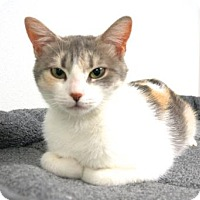 Adopt A Pet :: Mini P - Hendersonville, NC
