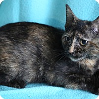 Adopt A Pet :: Raisin - Staunton, VA