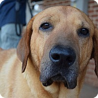 Adopt A Pet :: Marsh - Purcellville, VA
