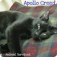 Adopt A Pet :: Apollo Creed - Hamilton, ON