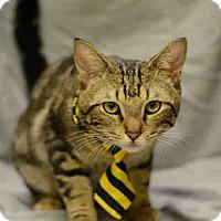 Adopt A Pet :: Herschel - St. Cloud, FL