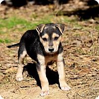 Adopt A Pet :: Slate - Groton, MA