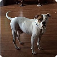 Adopt A Pet :: Duke - Jesup, GA