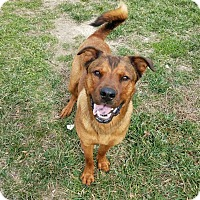 Adopt A Pet :: Chaz - Hendersonville, NC