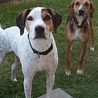 Adopt A Pet :: Linus - Pipe Creed, TX