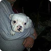 Adopt A Pet :: OKie - Northumberland, ON
