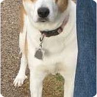 Adopt A Pet :: Ginger - Golden Valley, AZ