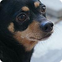 Adopt A Pet :: Lupe - Sacramento, CA