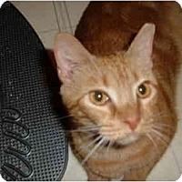 Adopt A Pet :: Blossom - No.Charleston, SC