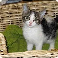 Adopt A Pet :: Jinxy - Catasauqua, PA