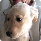 Adopt A Pet :: Pabst
