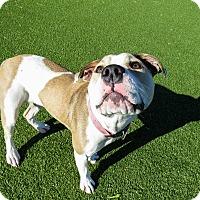 Adopt A Pet :: Athena - Meridian, ID