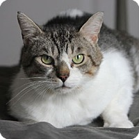 Adopt A Pet :: Romy - Verdun, QC