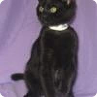 Adopt A Pet :: Hamilton - Powell, OH