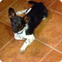 Adopt A Pet :: Luca - Gainesville, FL