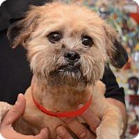 Adopt A Pet :: Barney - Urbana, OH