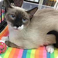 Adopt A Pet :: Keanu - Gilbert, AZ