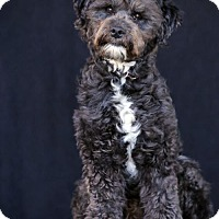 Adopt A Pet :: Dodger - SAN PEDRO, CA