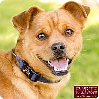 Adopt A Pet :: Carter - Marina del Rey, CA