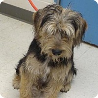 Adopt A Pet :: Max (Lonely Heart) - Gulfport, MS