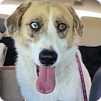 Adopt A Pet :: Mia - Coldwater, MI