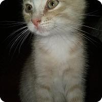 Adopt A Pet :: Orlando - Evans, WV
