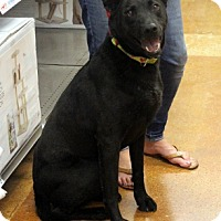 Adopt A Pet :: Jack - Arlington, TX