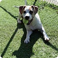 Adopt A Pet :: MICRO - Atlanta, GA