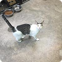 Adopt A Pet :: Petie - Bryan, OH