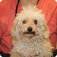 Adopt A Pet :: Willow - Wildomar, CA