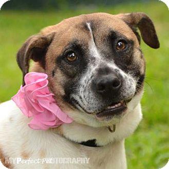Retriever (Unknown Type) Mix Dog for adoption in Miami, Florida - Molly