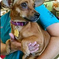 Adopt A Pet :: Calamity Jane aka C.J. - Cat Spring, TX