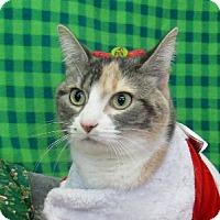 Adopt A Pet :: Mocha - Lloydminster, AB