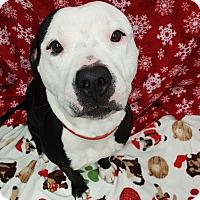 Adopt A Pet :: Titan - Bryan, OH