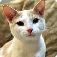 Adopt A Pet :: Mr. Kelly - Troy, MI