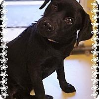 Adopt A Pet :: Aspyn - Los Alamitos, CA