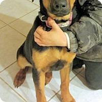 Adopt A Pet :: Angel Baby - Atlanta, GA