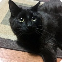 Adopt A Pet :: Maple - London, ON