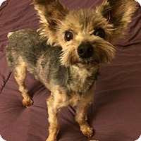 Adopt A Pet :: Benji - Corning, CA