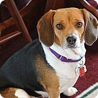 Adopt A Pet :: Berta - Novi, MI