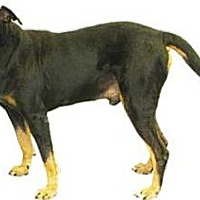 Adopt A Pet :: Bo - Inverness, FL
