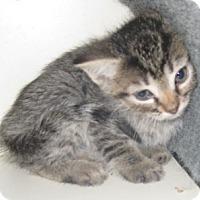 Adopt A Pet :: Coal - Dallas, TX